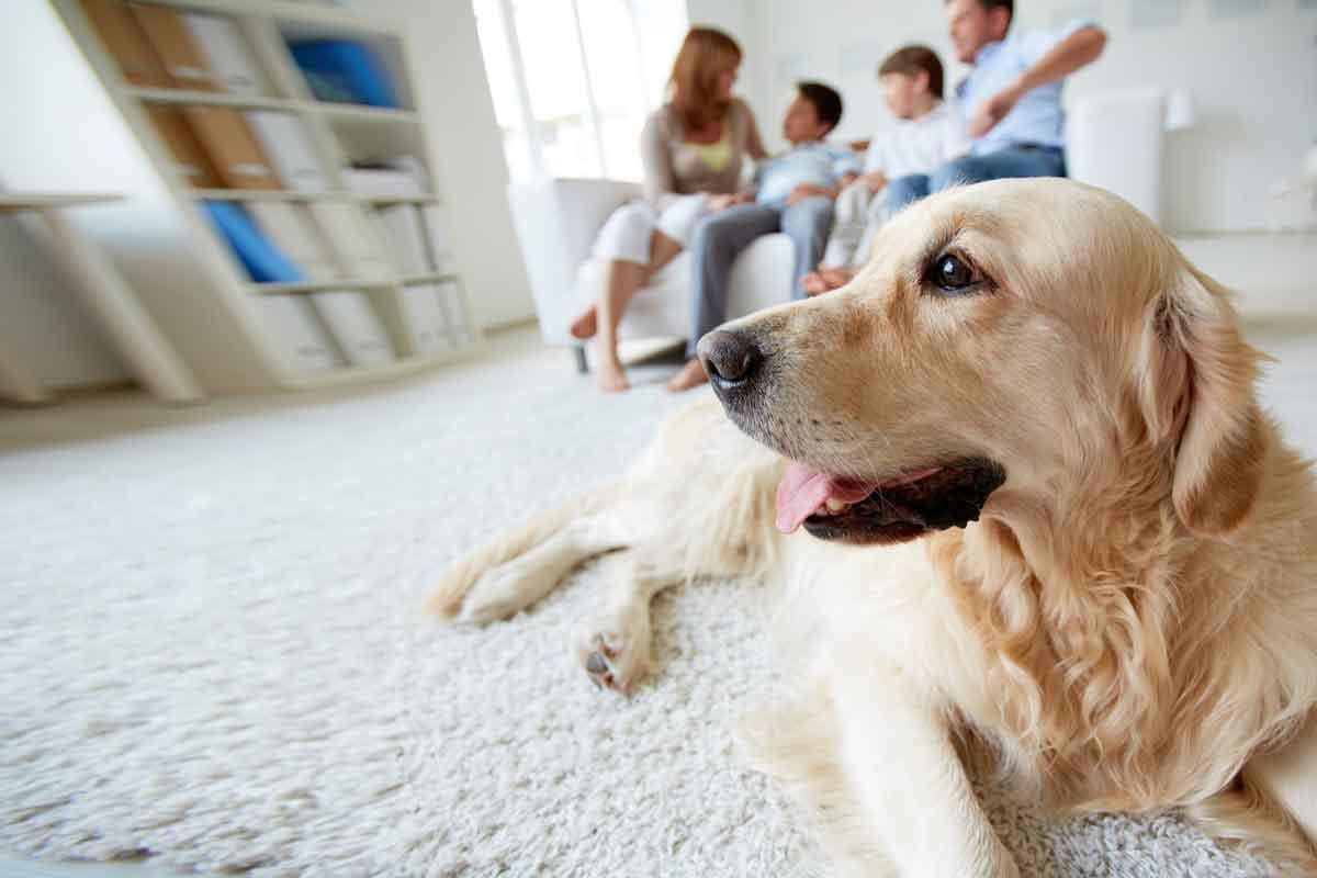 gezin met hond in vakantiehuis